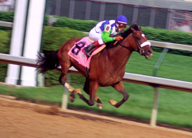 NEW PHOTOS ON TLT: Barbaro Wins 132th Kentucky Derby